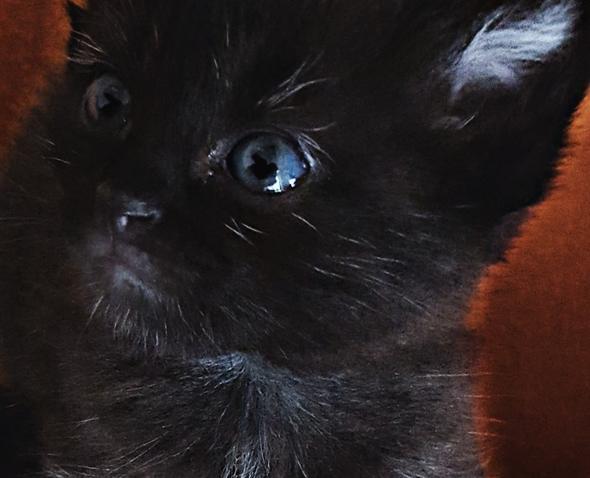 KATHI13 - (Gesundheit, Katze)