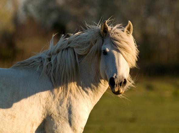...und schimmeln dann aus, bis sie komplett weiß sind. - (Pferde, Reitsport)