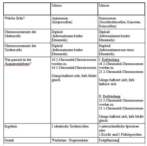 mitose und meiose im Vergleich - (Biologie, Bio, Genetik)