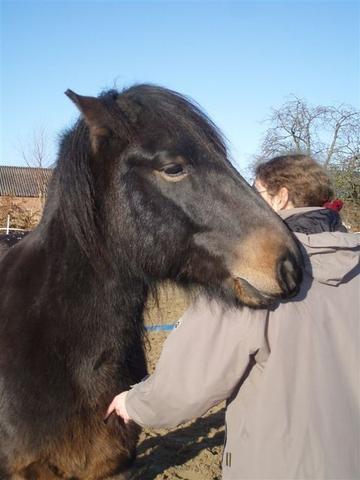 Das Pferd ist undicher - (Angst, Pferde, reiten)