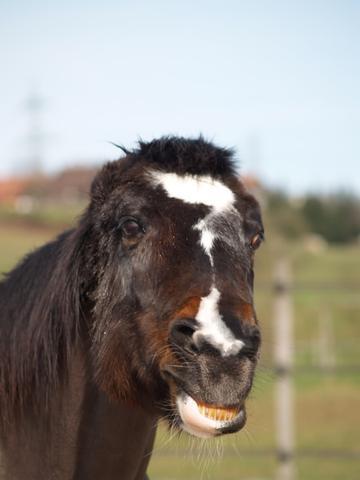 Das Drohende Pferd - (Angst, Pferde, reiten)