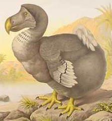 ExtinctDodoBird.jpeg - (Buch, Bilder, Schreiben)