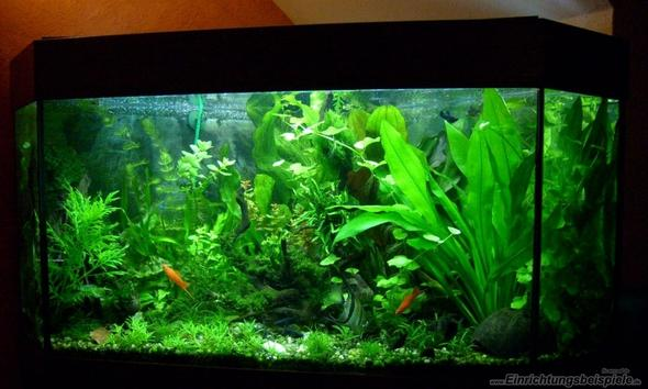 So ungefähr sollte dein Becken bepflanzt sein ;) - (Fische, Aquarium, Aquaristik)