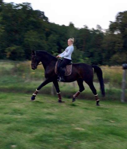 garten - (Pferde, reiten, springen)