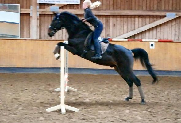 spring - (Pferde, reiten, springen)