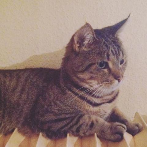 - (Foto, Katze, wunderschoen)