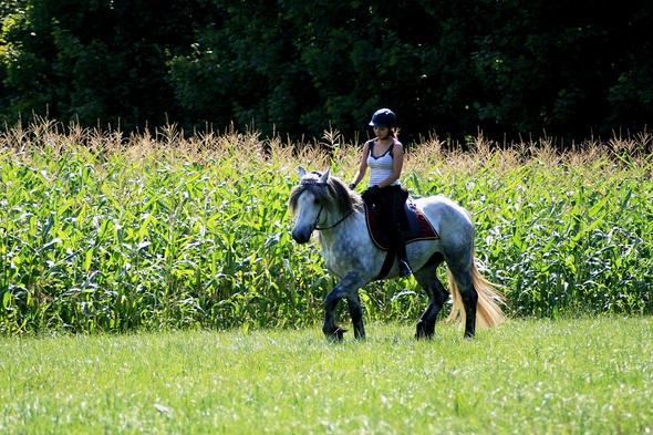 """Hier reite ich mit einem """"ganz schlimmen"""" Gebiss :P  - (Pferde, reiten, Stall)"""