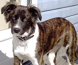 Bild 2 - (Hund, Hunderasse)
