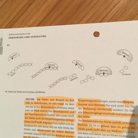 Hier sieht du noch mal Bildhaft wie die Amylose/ Stärkeketten geteilt werden - (Schule, Biologie, lernen)
