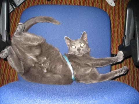 Bilduntertitel eingeben... - (Tiere, Katzen, Sterilisation)