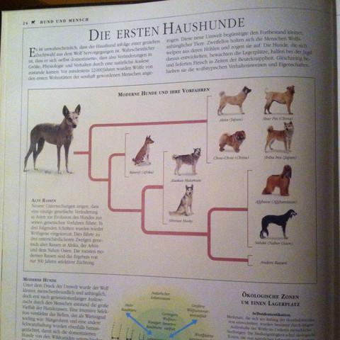 Haushunde - (Hund, Hunderasse, Ähnlichkeit)