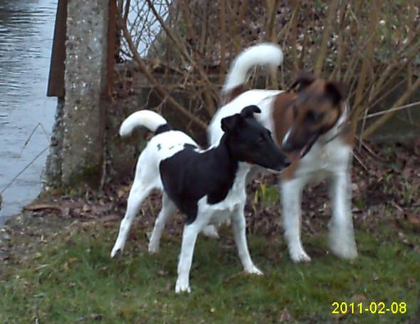 - (Hund, Haustiere, Hundefutter)