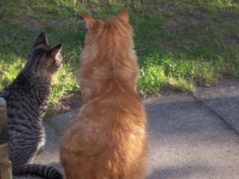 - (Katzen, Gedanken)