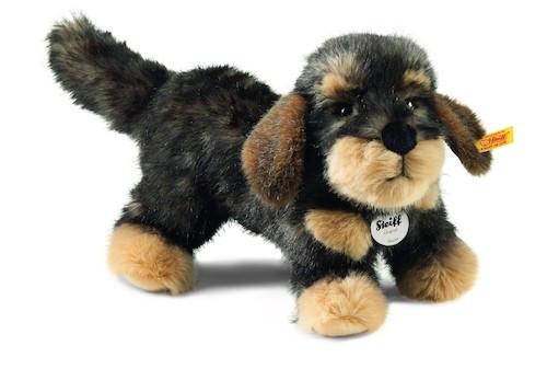 Hund - (Umfrage, Hund, Abstimmung)