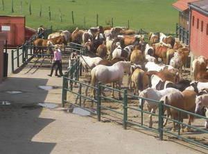 Reiterhof Rohe - (Pferde, reiten, Reiterhof)