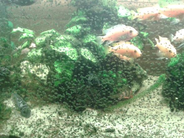 - (Aquarium, Beleuchtung, Algen)