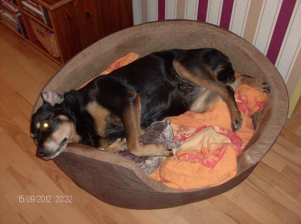 Epileptische Anfälle Beim Hund Durch Eine Infektion Epilepsie