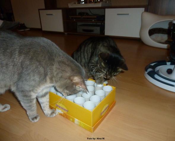 Gute Geschenke Für Katzen Zum Selbermachen Katze Geschenkideen