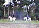 - (Angst, Pferde, reiten)