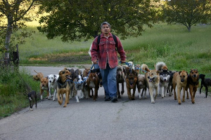 How Many Dogs Does Cesar Millan Have