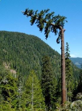 - (Baum, fall)