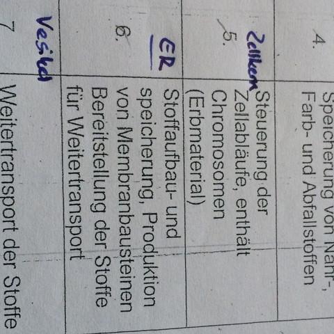 <----- - (Biologie, ER, Endoplasmatisches Retikulum)
