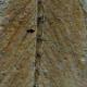 Londoner Exemplar Schwanz