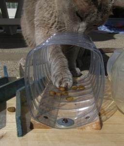 - (Tiere, Geschenk, Katze)