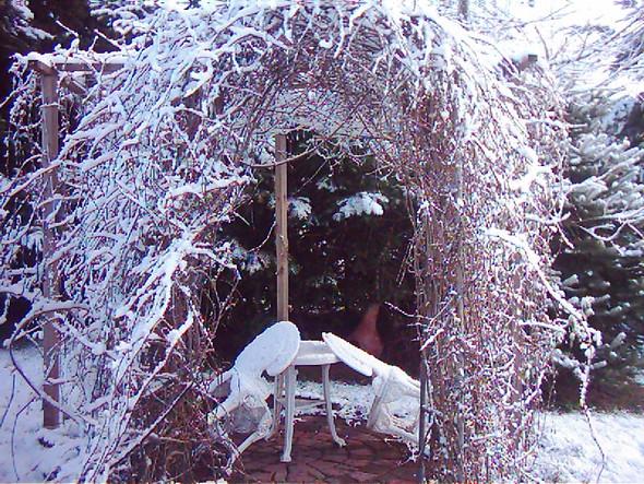 Winterbild - (Ideen, Garten)