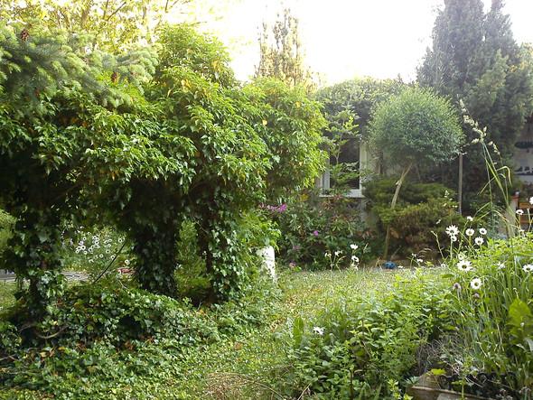 Efeu geschnitten an Wasserstelle - (Ideen, Garten)