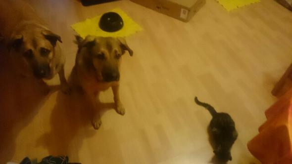 Klickern mit Hunden und Katze - (Tiere, Katze, Katzen)