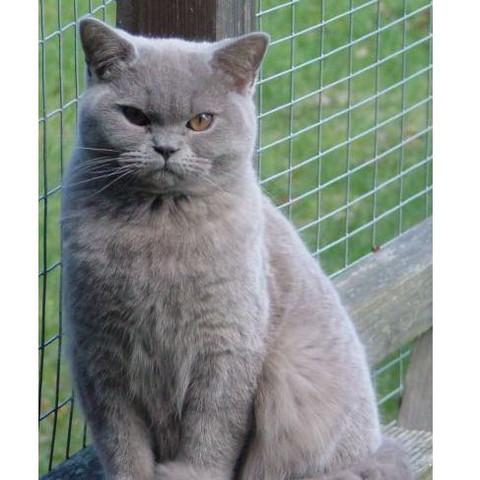 Katze - (Katze, Google, Rasse)