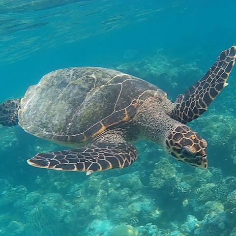 Turtle - (Urlaub, Wasser, Sommer)