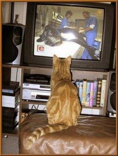 - (Tiere, Tiergesundheit, KatzenKater)