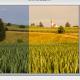 Farbtemperatur in einer Bildbearbeitung ändern (hier Photoshop).
