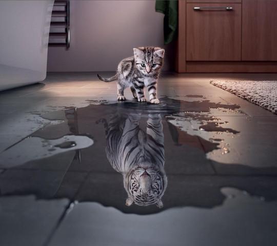 Katzentraum: Wenn ich einmal groß bin! - (Tiere, Katze, Haustiere)