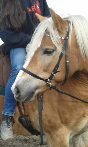 - (Pferde, reiten, basteln)