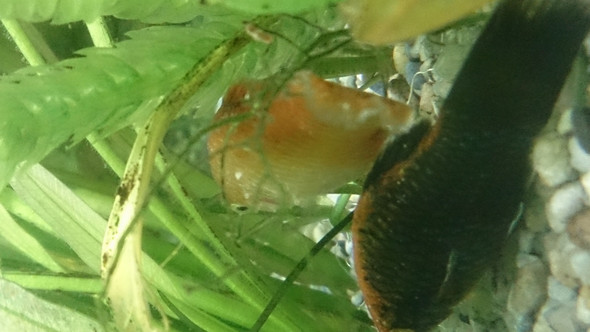 Wird schlimmer - (Krankheit, Fische, Aquarium)