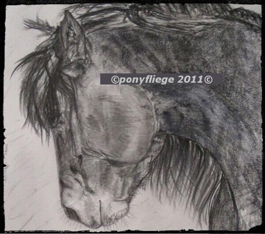 pferd copyright ponyfliege 2011 - (Pferde, Kunst, zeichnen)