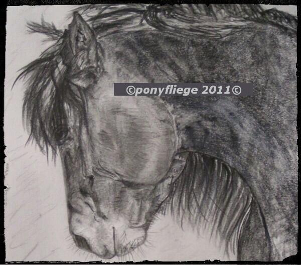 habt ihr tipps zum zeichnen eines pferde portrait bleistift tierportrait. Black Bedroom Furniture Sets. Home Design Ideas