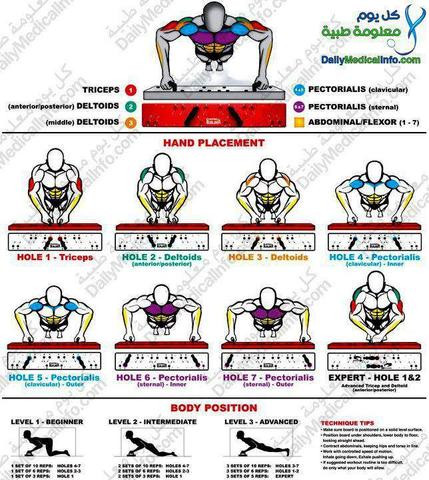Muskeln bei Liegestützen - (Körper, Stütze)