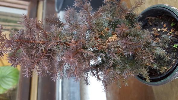Bild4 - (Garten, Pflanzen, Baum)