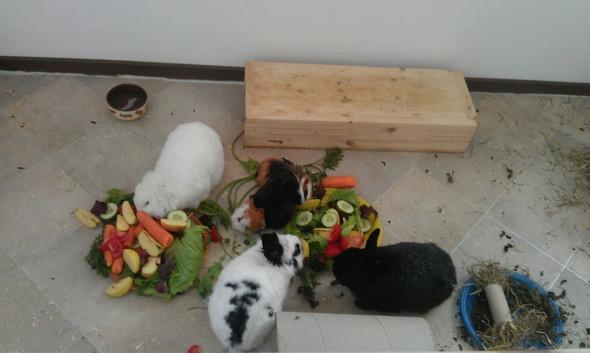 - (Kaninchen, Meerschweinchen, Hasen)