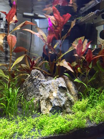 ca. 3 Wochen Dry Start, 1-2 Wochen animpfen und nun der erste Besatz - (Haustiere, Fische, Aquarium)