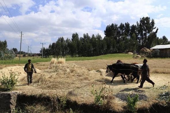 Landwirte im Simien-Gebirge - (Wasserleitung, Äthiopien, Duerre)