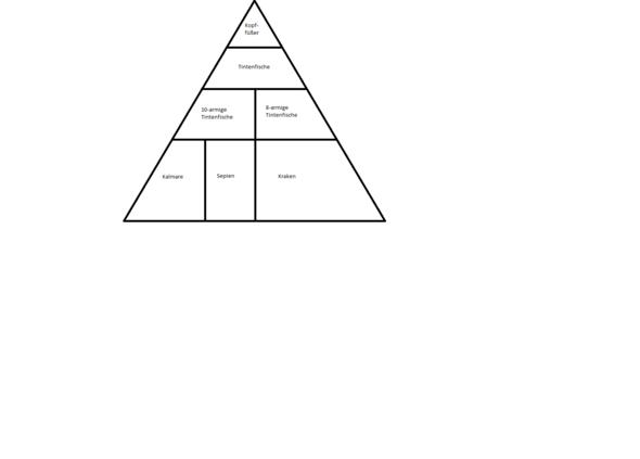 - (pyramide, Tintenfisch)