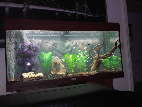 bitte - (Fische, Aquarium, Besatz)