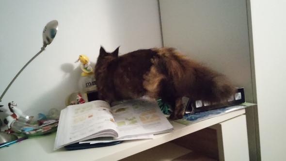 meine Lucy :O - (Katze, Katzen, kratzen)