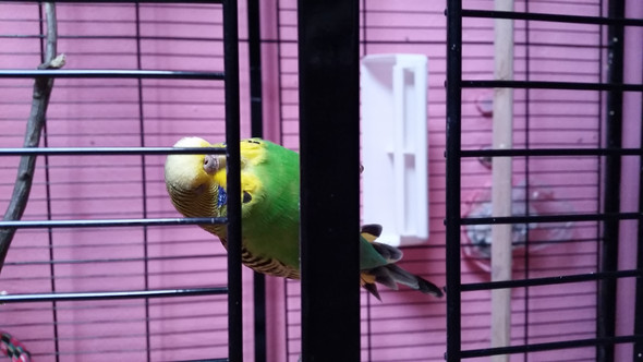 nala - (Haustiere, Garten, Vögel)