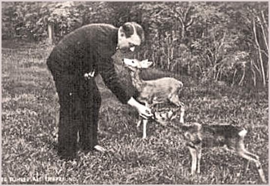 Adolf Hitler füttert Rehkitze - (Tiere, Hitler)